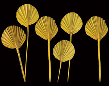Palm Spear Round Yellow