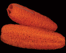 Luffa Orange