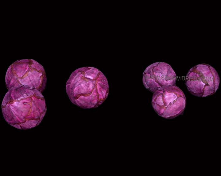 Sola Cabbage Ball Burgundy.jpg