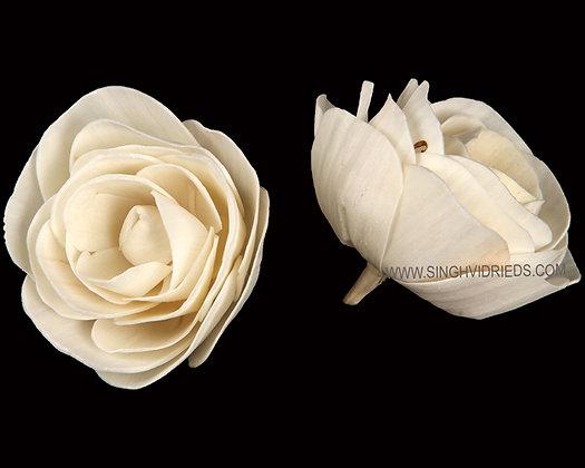 Sola Ranunculas Flower