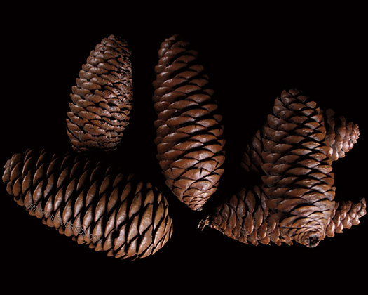 Rai Cone Natural