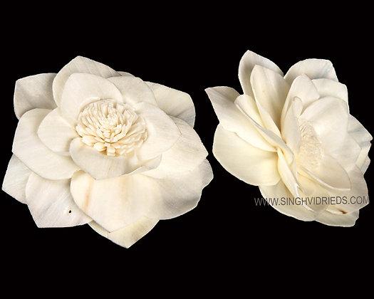 Sola Wax Flower