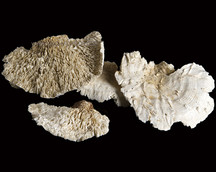 Sponge Mushroom Bleach