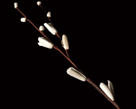 Sola Cleome Stick