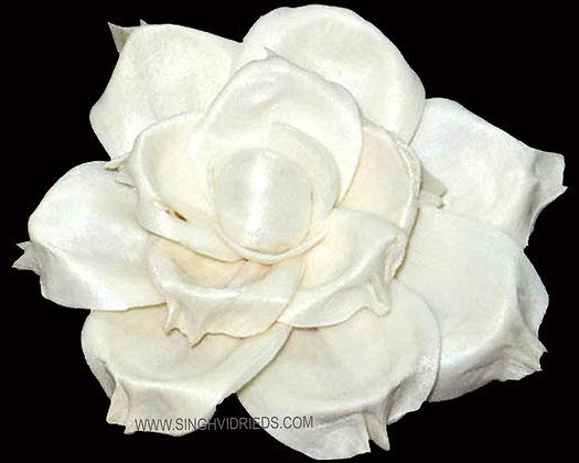 Sola Magnolia Flower