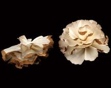 Sola Cabbage Flower