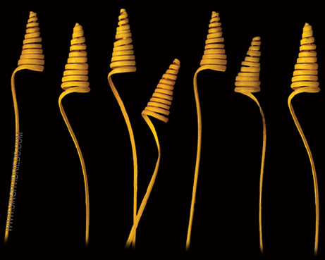 Cane Cone Yellow
