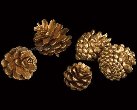 Euro Cone Gold
