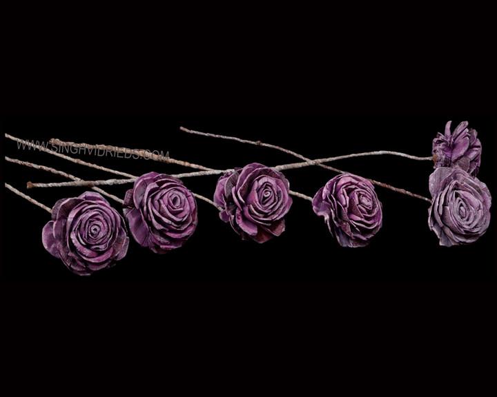 Sola Skin Beauty Rose 6cm on TST Antique Two Tone Erika