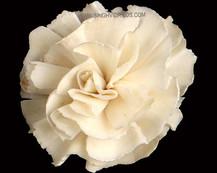 Sola Carnation Flower