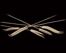 Ladies Finger on Bamboo Stem