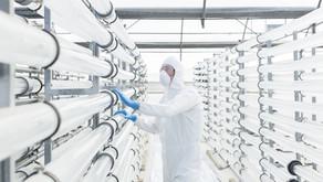 Quem é o engenheiro biotecnológico?
