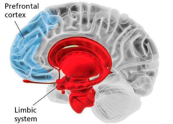 brain-chart.jpg