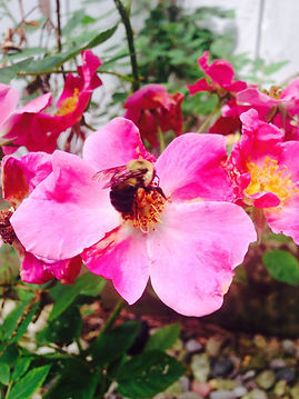 Saving Bees @ Hippocrateas