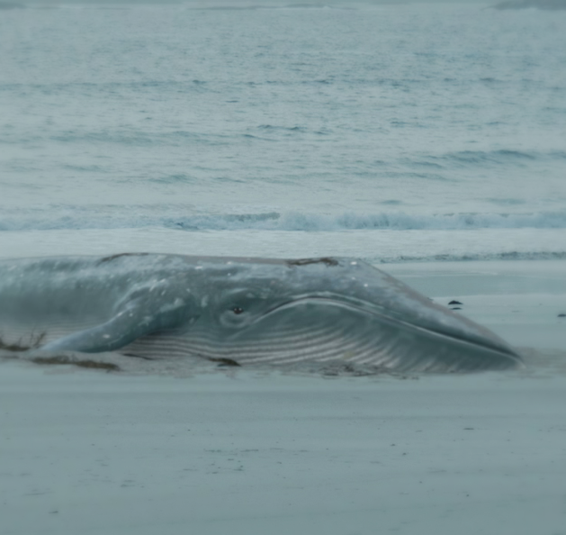 Lilyhammer - Whale