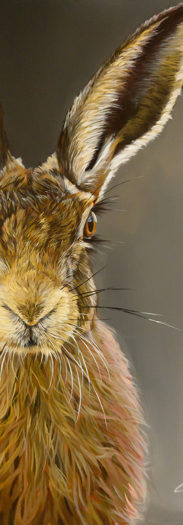 The Cotswold Hare