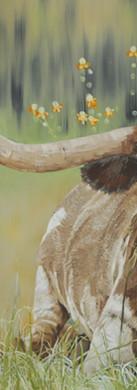 Longhorn in Repose