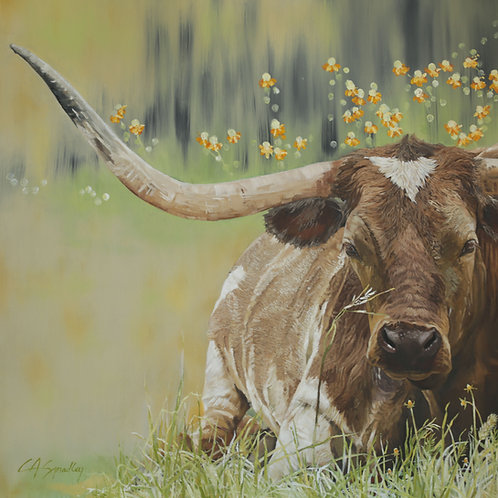 """Longhorn in Repose"""