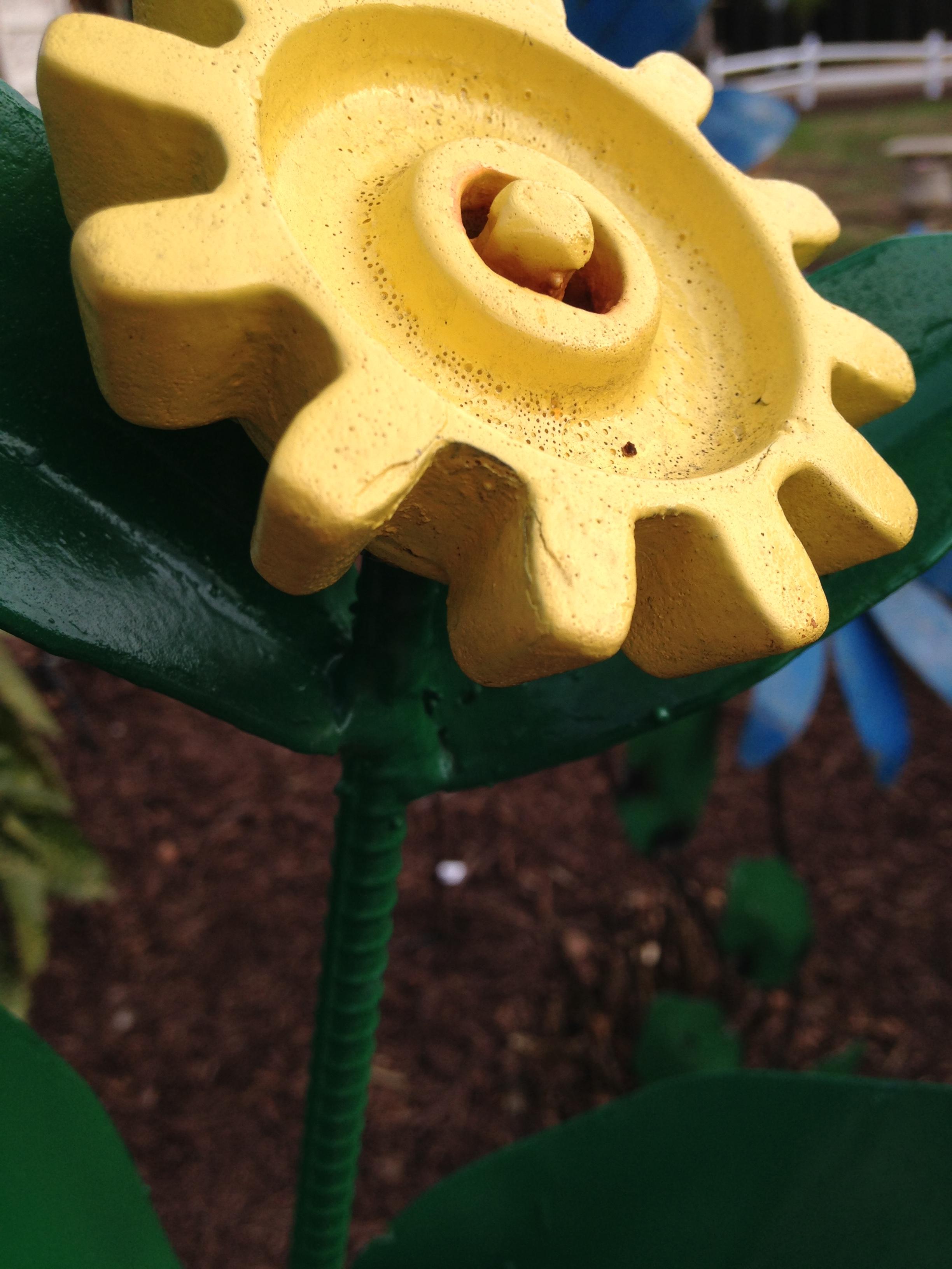 castrebar-iron-yellow-flowers_27811340446_o