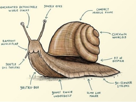 Piaget Says You Have a Mind Like a Mollusc