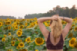 sunflower field and UK-157.jpg