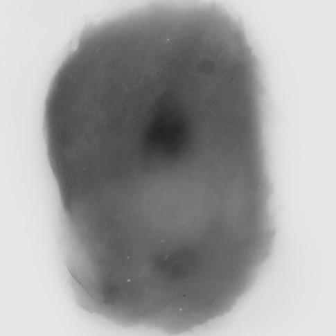 Lápiz y óleo sobre papel mylar, 23 x 18 cm, 2014.
