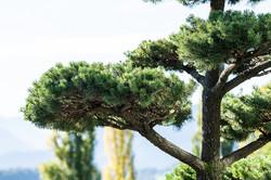 Horticulturist Lucerne Meggen Zug
