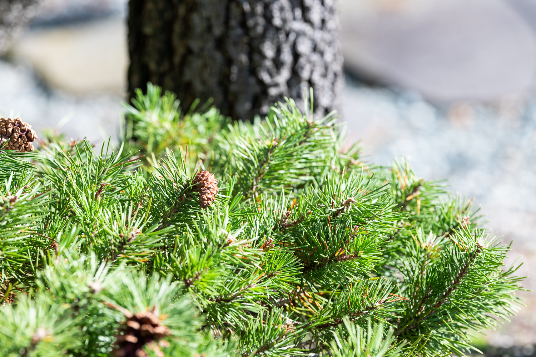 Gartenbau Meggen Inwil Root Gisikon