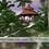 Thumbnail: Hiding in a Tropical Heaven