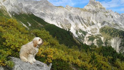 Saulakopf (2517 m)