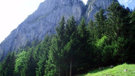 Bocksberg (1461 m)
