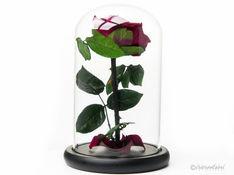 360 degree-Red Rose-google.mp4