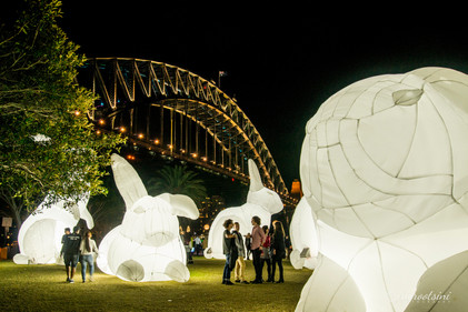 White Bunnies at the Harbour Bridge