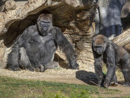 San Diego Zoo, Safari Park and Seaworld Reopen