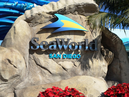 What to Expect When SeaWorld Reopens