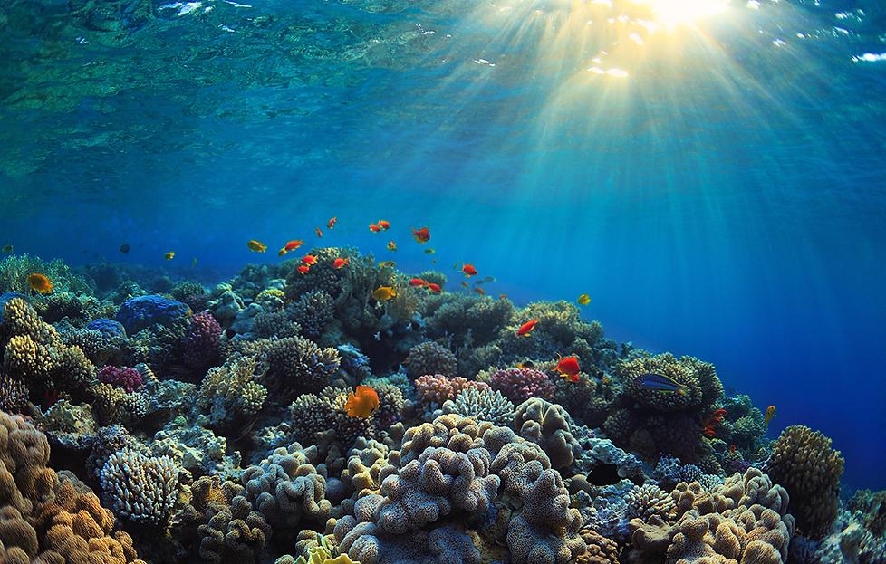 1180_CCC_ocean_acidification_rev.png