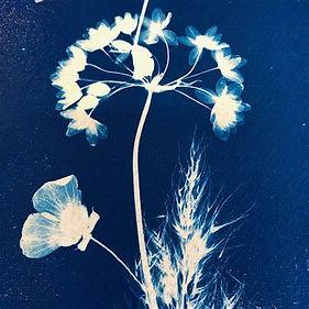 cyanotype 1.jpg