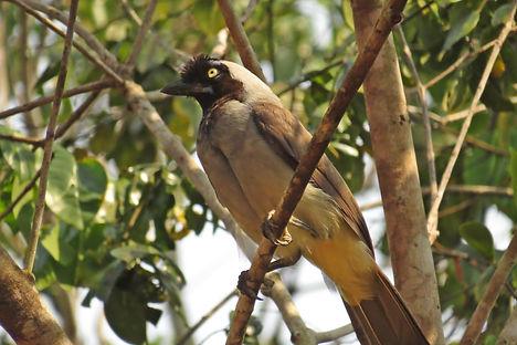 Birding in Rondônia