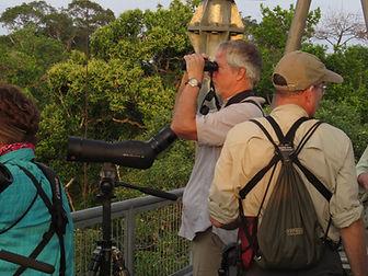 Birdwatching in Manaus
