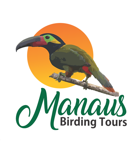 Manaus Birding Tours
