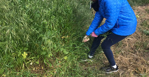 Volunteering with Grassroots Ecology