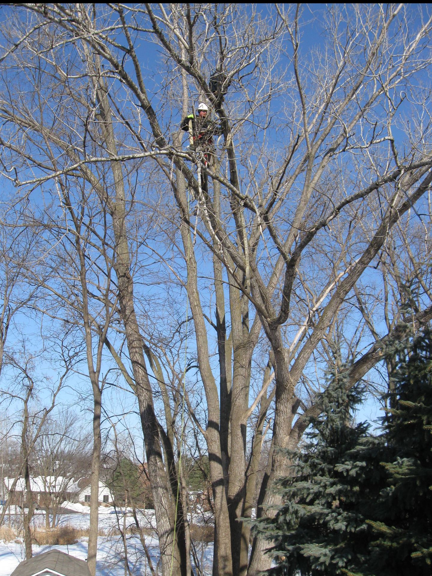 TREE TRIMMING OR REMOVAL