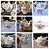 Thumbnail: Teapot Rental - Cottage Pattern
