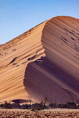 Dune 45 #1