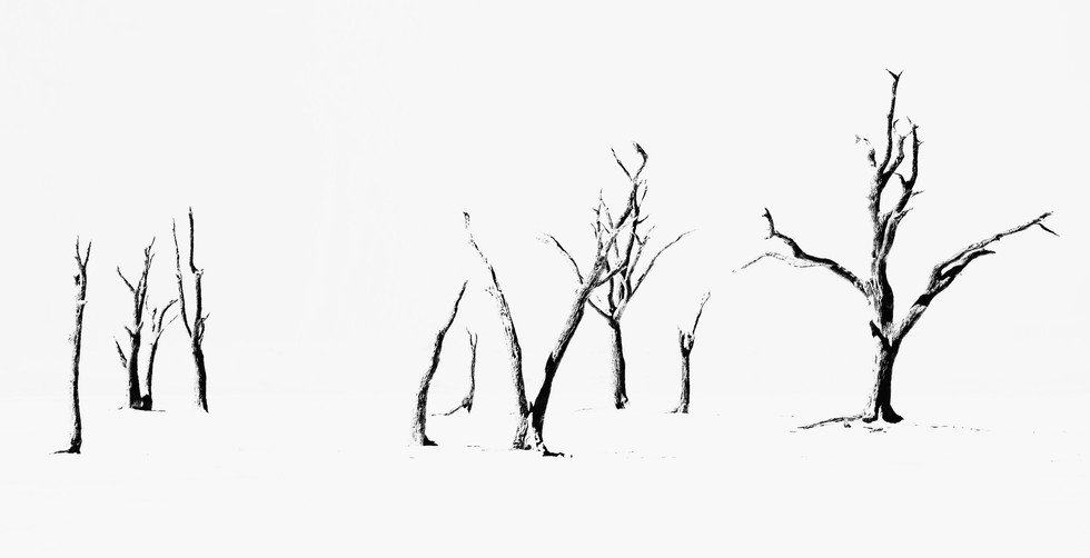 Namibian Twigs