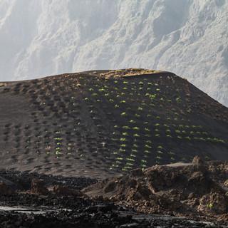 Виноградная лоза на склонах побочного кратера вулкана Фогу  Vines grow on slopes of a collateral volcanic cone, Fogo caldera