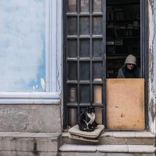 Уличный портрет с дверью и кошками Street portrait with a door and cats