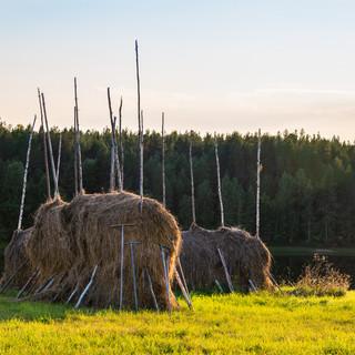 Вечерние стога, Архангельская область  Haystacks in the evening, Arkhangelsk region