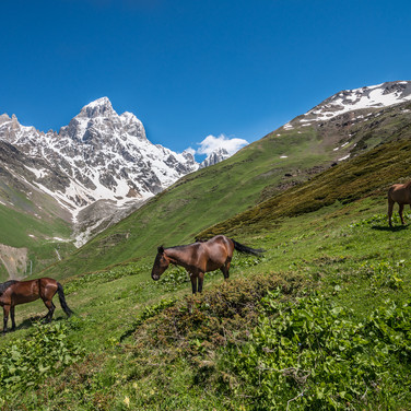 Лошади в горах и гора Ушба на заднем плане Horses grazing in the mountains, and Ushba mountain in the background