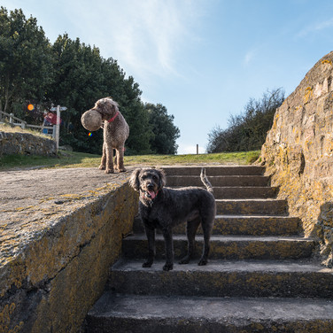Собаки на прогулке в Блэк-Рок рядом с Чепстоу Dogs on a walk at Black Rock near Chepstow